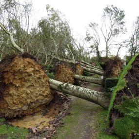 stormschade Houtigehage, 2-11-2013