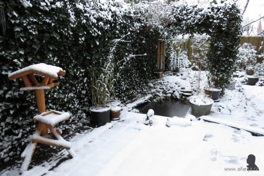 een laagje sneeuw in de tuin