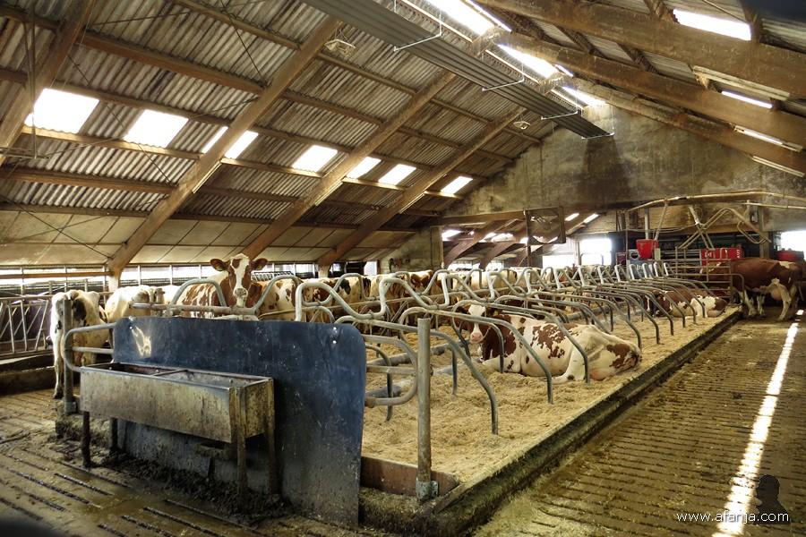 op de boerderij - 6