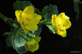 voorjaar bij de vijver - 3