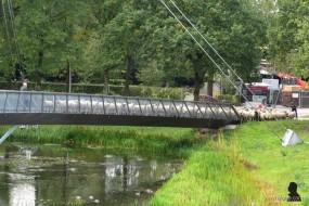 Grutte Fryske skieppekuier (2)