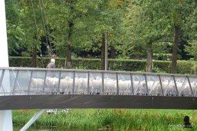 fietsbrug 'de Slinger' - 6 - bike bridge 'the Garland'