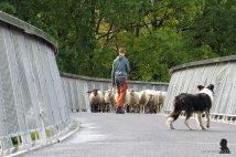 fietsbrug 'de Slinger' - 7 - bike bridge 'the Garland'