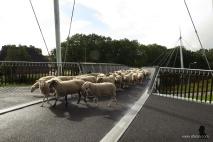 fietsbrug 'de Slinger' - 8 - bike bridge 'the Garland'