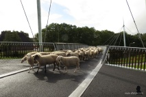 fietsbrug 'de Slinger' - 8 - bike bridge 'the Garland'