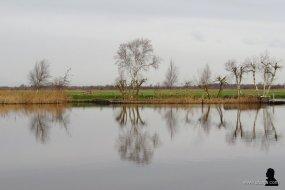 grijze weerspiegelingen - 3