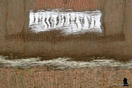 Tripgemaal - 5