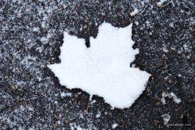 sneeuwwandeling 3