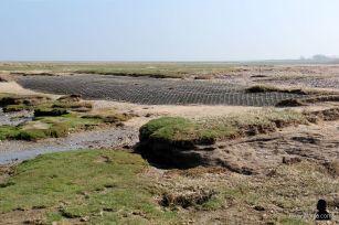 buitendijks gebied de Peazemerlannen (2)