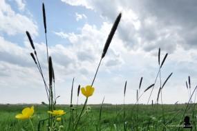 2. voorjaar - spring - maaityd