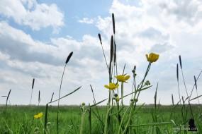 3. voorjaar - spring - maaityd