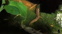 1. salamanders in de vijver