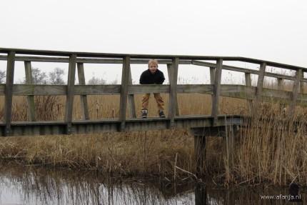 maart 2012 - in de Jan Durkspolder