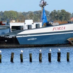 Forza - 3
