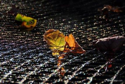 gevangen bladeren - 1
