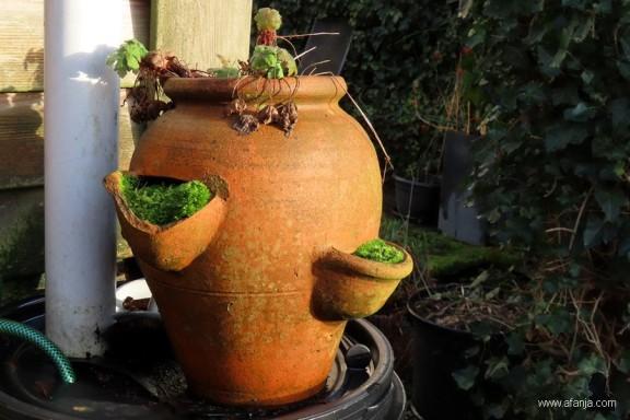 mosculturen - 1