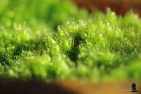 mosculturen - 3