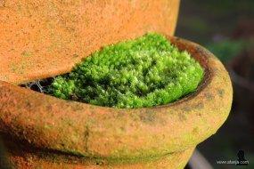 mosculturen - 2