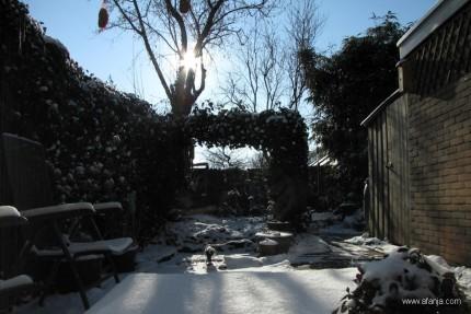 de tuin - 4 februari 2012