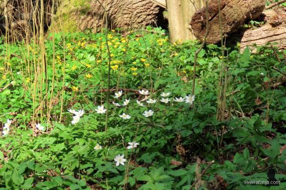 wilde bloemen in de Ecokathedraal